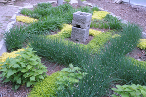 Herb garden with various herbs growing